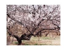 郑州近郊:樱桃沟 [详细]